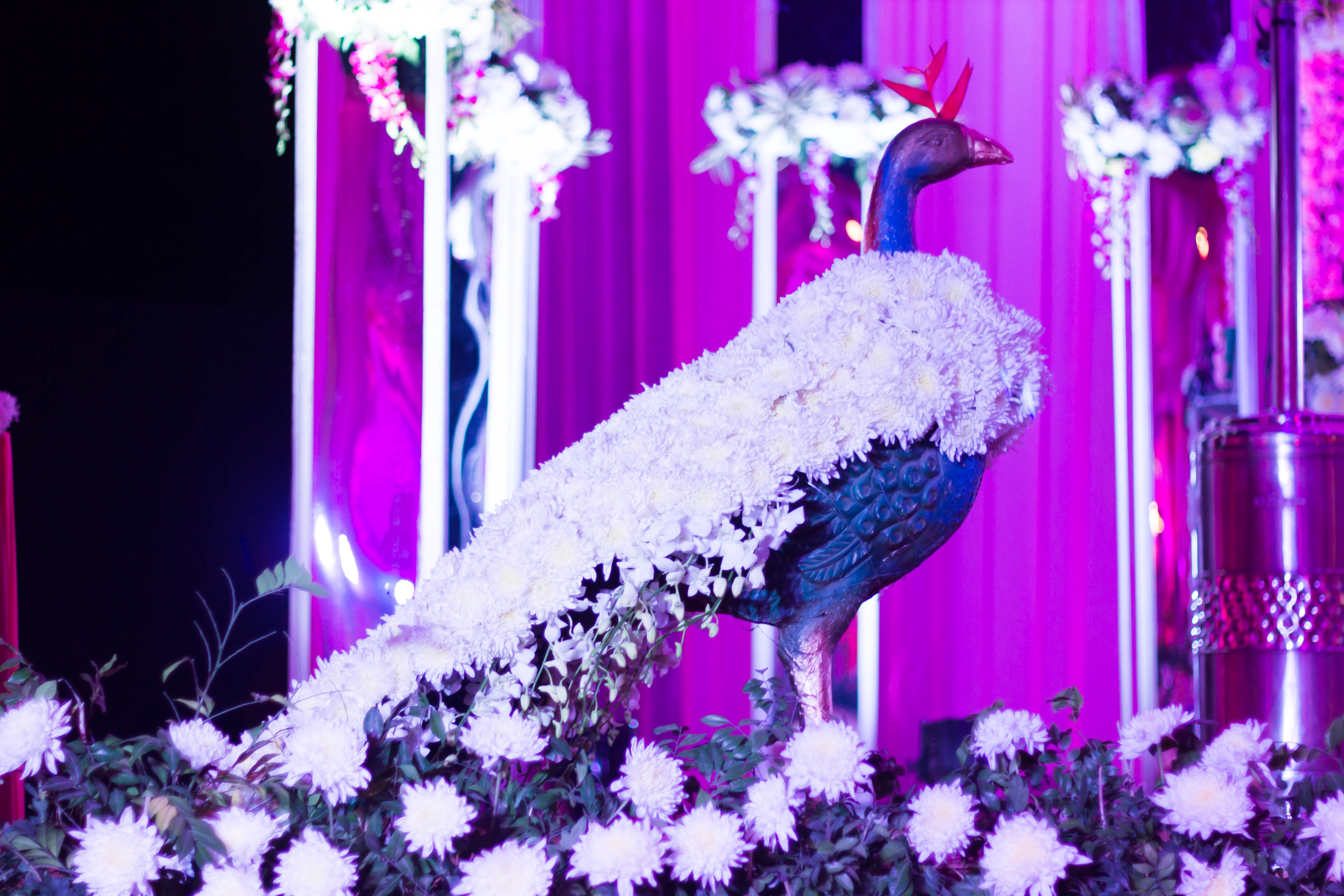 Wedding in Chhabra Farms New Delhi